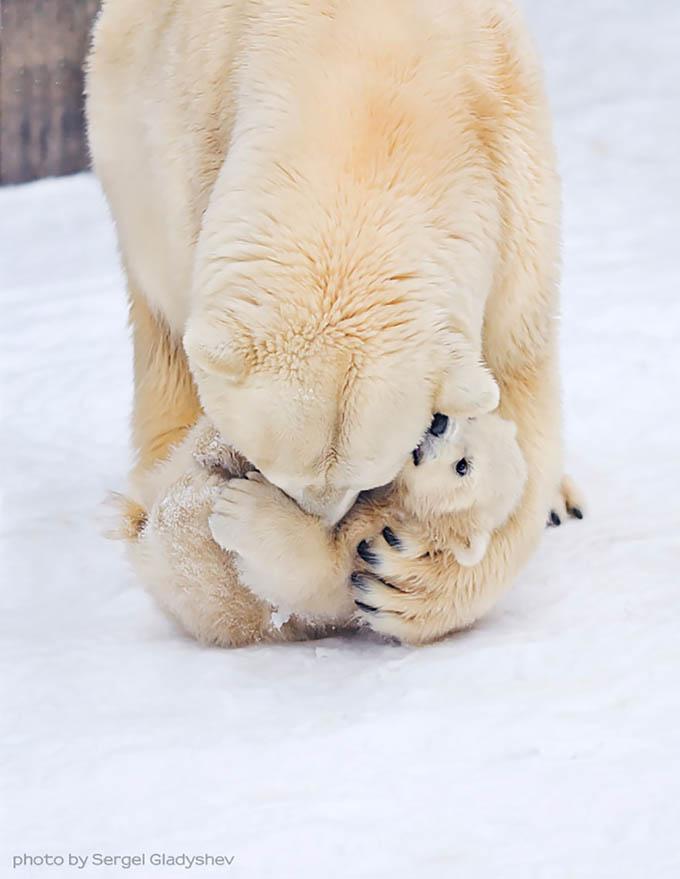 ursos e seus filhotes (10)