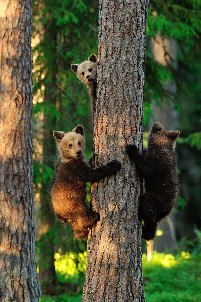 ursos e seus filhotes (11)