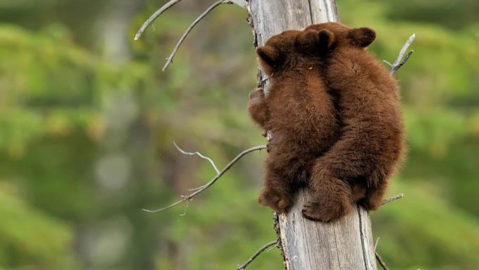 ursos e seus filhotes (12)
