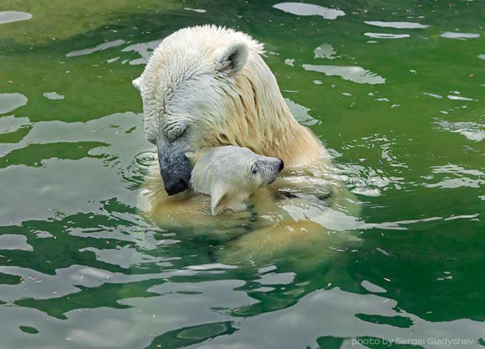 ursos e seus filhotes (14)
