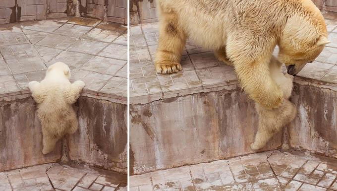 ursos e seus filhotes (16)