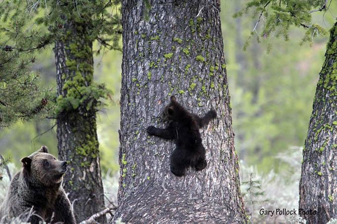 ursos e seus filhotes (17)