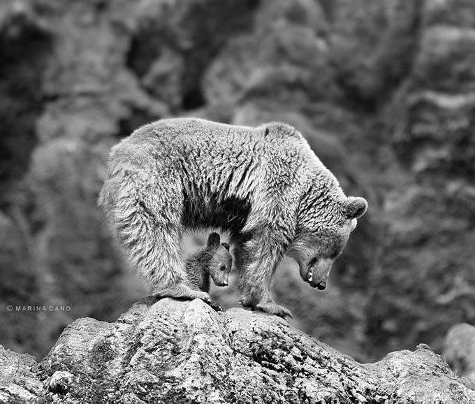 ursos e seus filhotes (19)