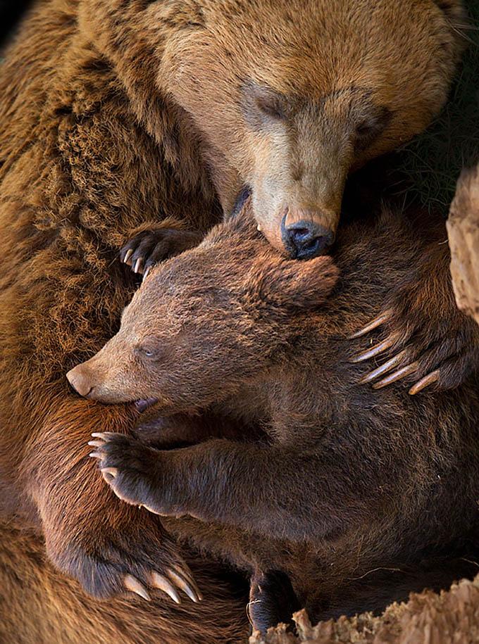 ursos e seus filhotes (20)