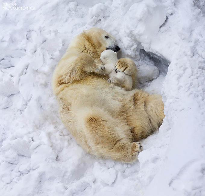 ursos e seus filhotes (8)