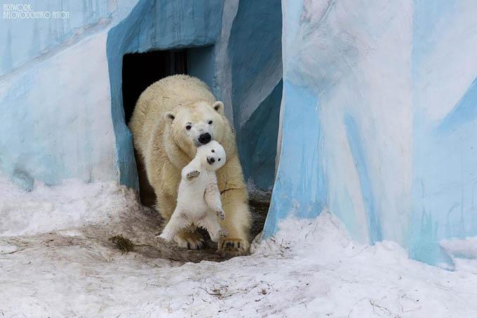 ursos e seus filhotes (9)