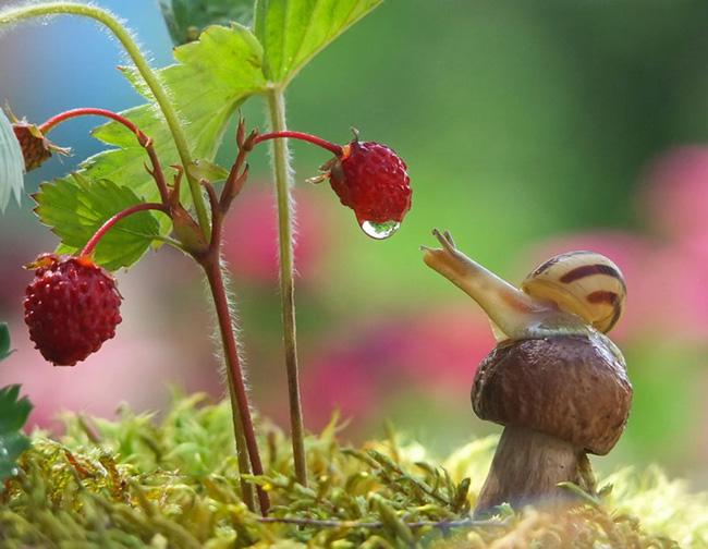 o pequeno mundo dos cogumelos (1)