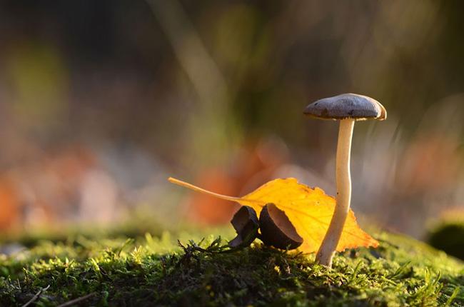 o pequeno mundo dos cogumelos (13)