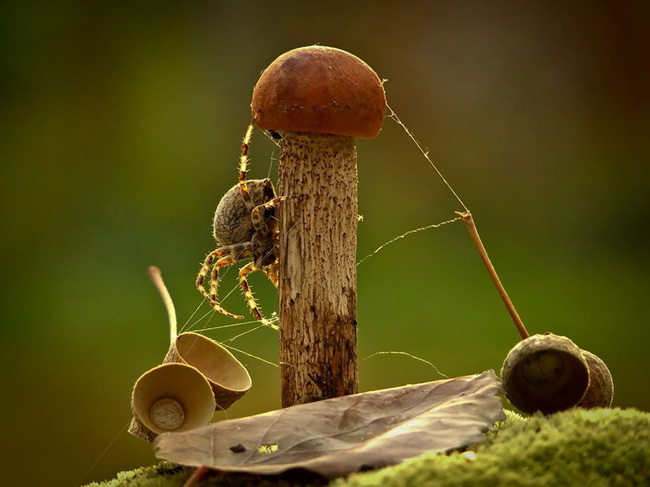 o pequeno mundo dos cogumelos (19)