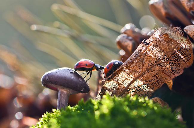 o pequeno mundo dos cogumelos (22)