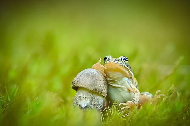 o pequeno mundo dos cogumelos (25)