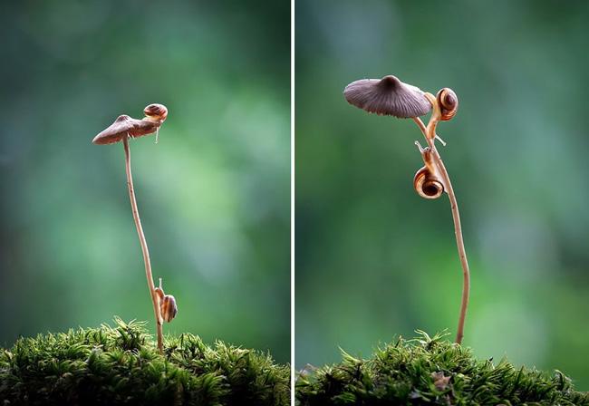 o pequeno mundo dos cogumelos (3)