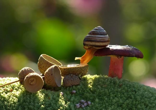 o pequeno mundo dos cogumelos (6)