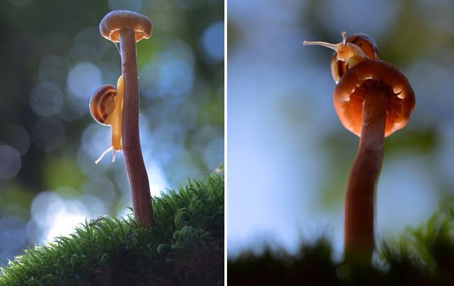 o pequeno mundo dos cogumelos (7)