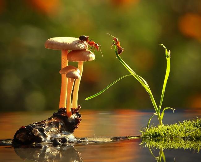 o pequeno mundo dos cogumelos (8)