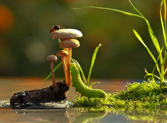 o pequeno mundo dos cogumelos (9)
